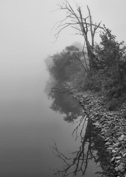 Fog Greeting Card featuring the photograph Reflections In Black And White by Dan Sproul