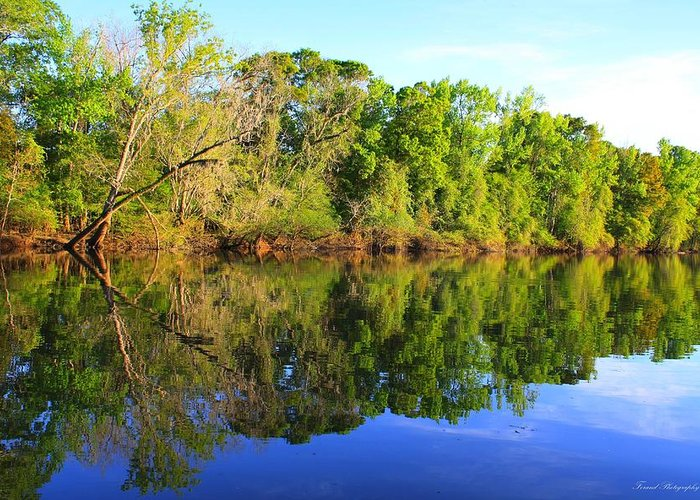 River Greeting Card featuring the photograph Reflections On The River by Debra Forand