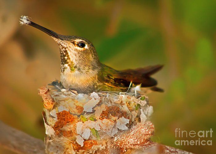 Humming Birds Greeting Card featuring the photograph Repairing by Robert Bales