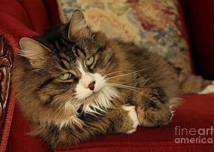 Rescue Greeting Card featuring the photograph Rescue Cat Living In The Lap Of Luxury by Inspired Nature Photography Fine Art Photography