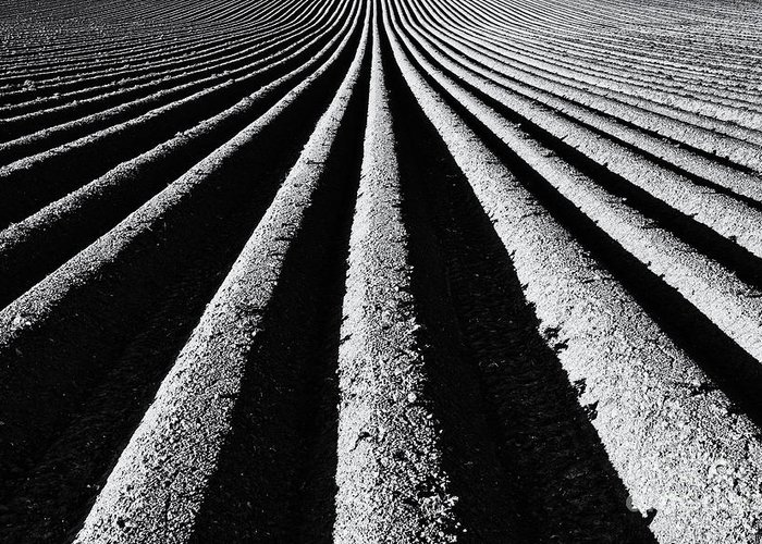 Ploughed Field Greeting Card featuring the photograph Ridge And Furrow by Tim Gainey