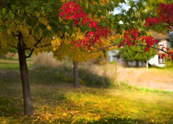 Autumn Greeting Card featuring the photograph Riverbend Orchard by Theresa Tahara