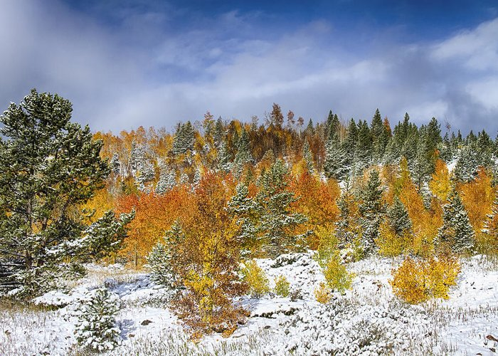 Snow Greeting Card featuring the photograph Rocky Mountain Autumn Storm by James BO Insogna