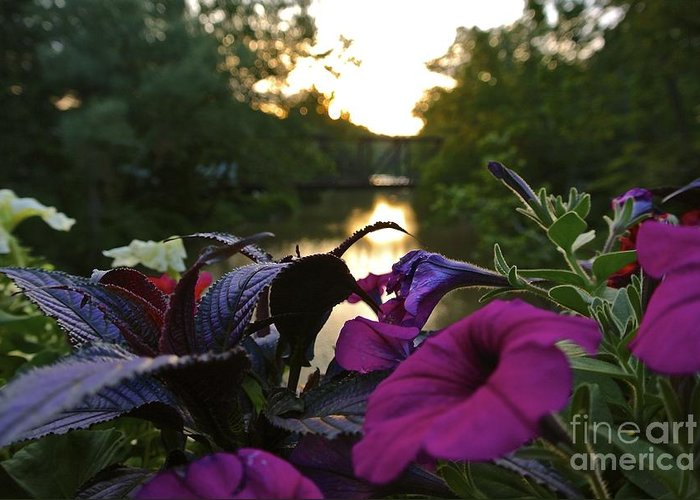 Romantic Greeting Card featuring the photograph Romantic River View by Customikes Fun Photography and Film Aka K Mikael Wallin