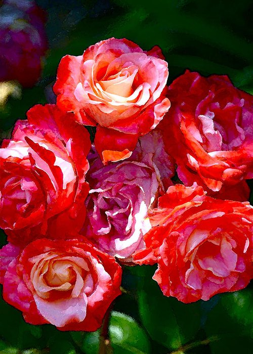 Floral Greeting Card featuring the photograph Rose 124 by Pamela Cooper
