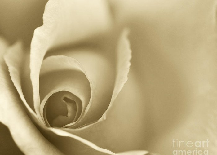 Rose Greeting Card featuring the photograph Rose Close Up - Gold by Natalie Kinnear