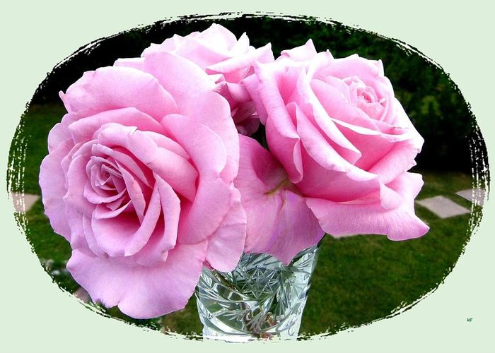 Royal Kate Roses Greeting Card featuring the photograph Royal Kate Roses by Will Borden