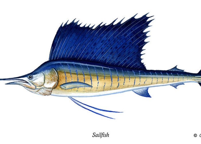 Charles Greeting Card featuring the painting Sailfish by Charles Harden