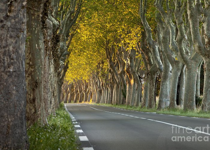 Tree Greeting Card featuring the photograph Saint Remy Trees by Brian Jannsen