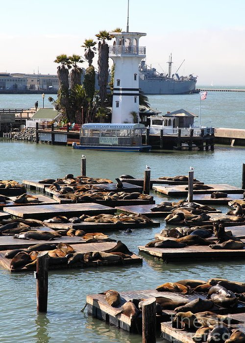 San Francisco Greeting Card featuring the photograph San Francisco Pier 39 Sea Lions 5d26103 by Wingsdomain Art and Photography