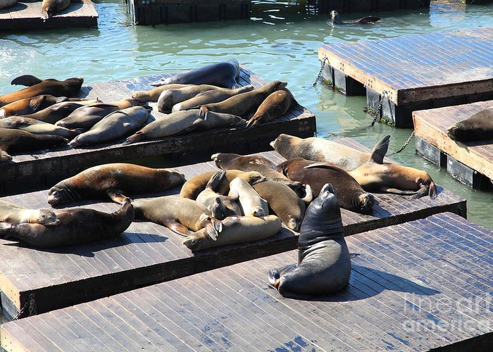 San Francisco Greeting Card featuring the photograph San Francisco Pier 39 Sea Lions 5d26113 by Wingsdomain Art and Photography