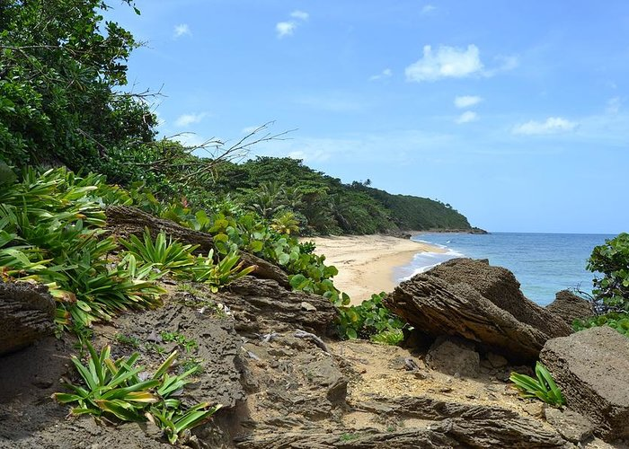 Tropical Greeting Card featuring the photograph Sandy Beach At Rincon Pr by Tim Treadwell