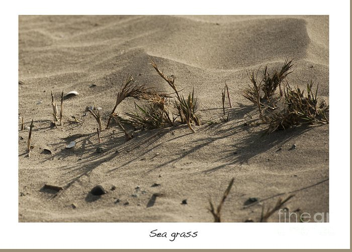 Sea Grass In The Sand Greeting Card featuring the photograph Sea Grass by Artist and Photographer Laura Wrede
