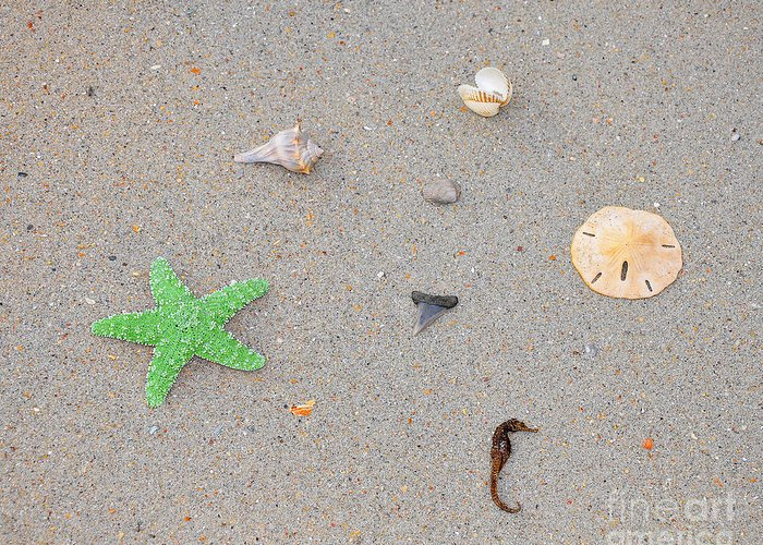 Sea Star Greeting Card featuring the photograph Sea Swag - Green by Al Powell Photography USA