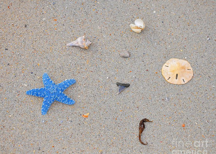 Sea Star Greeting Card featuring the photograph Sea Swag - Light Blue by Al Powell Photography USA