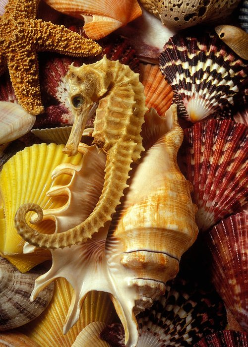 Sea Shells Starfish Greeting Card featuring the photograph Seahorse Among Sea Shells by Garry Gay