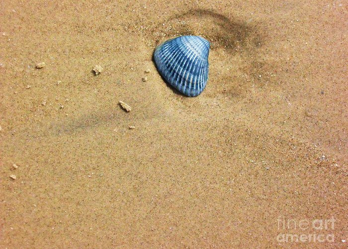 Seashell Greeting Card featuring the photograph Seashell by Venus