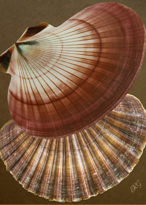 Seashell Greeting Card featuring the photograph Seashells Spectacular No 53 by Ben and Raisa Gertsberg
