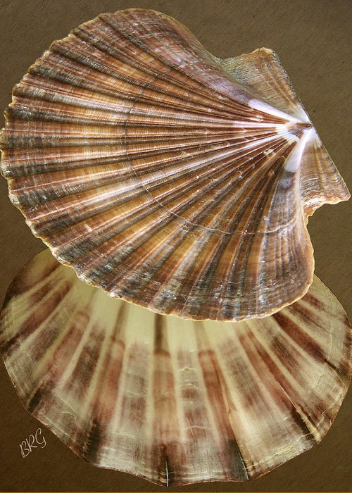 Seashell Greeting Card featuring the photograph Seashells Spectacular No 54 by Ben and Raisa Gertsberg