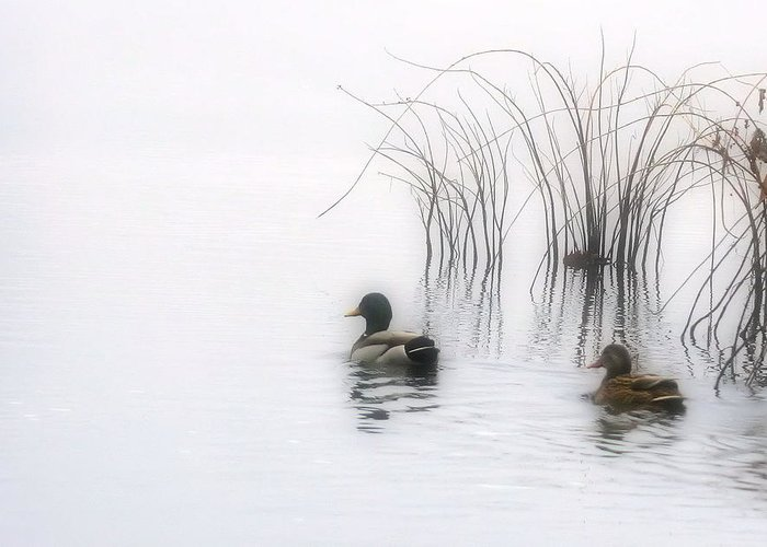 Ducks Greeting Card featuring the photograph Serene Moments by Karol Livote