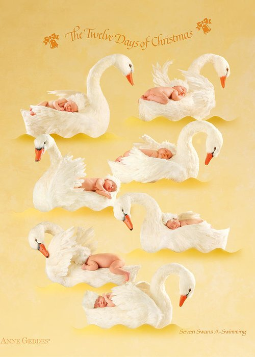 Christmas Greeting Card featuring the photograph Seven Swans-a-swimming by Anne Geddes