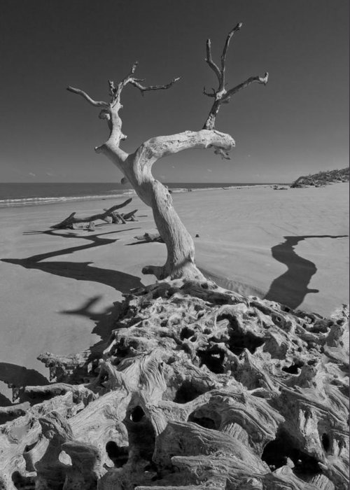 Clouds Greeting Card featuring the photograph Shadows At Driftwood Beach by Debra and Dave Vanderlaan