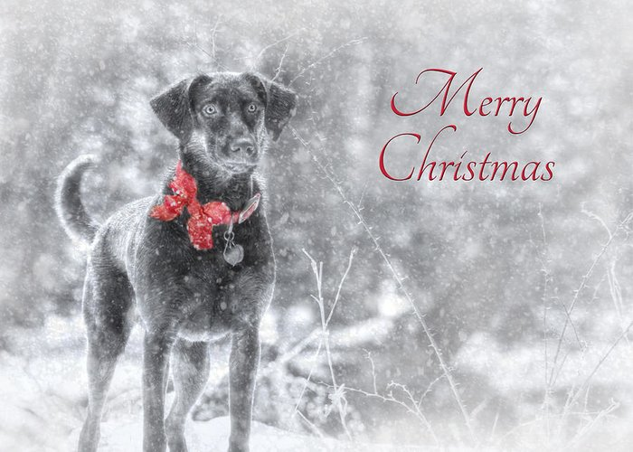 Merry Christmas Greeting Card featuring the photograph Sienna - Merry Christmas by Lori Deiter