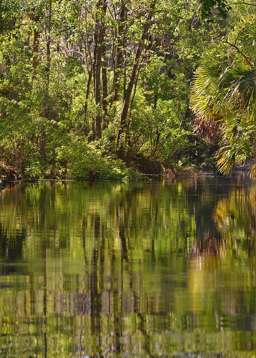 Silver Greeting Card featuring the photograph Silver Springs Nature Park Florida by Christine Till