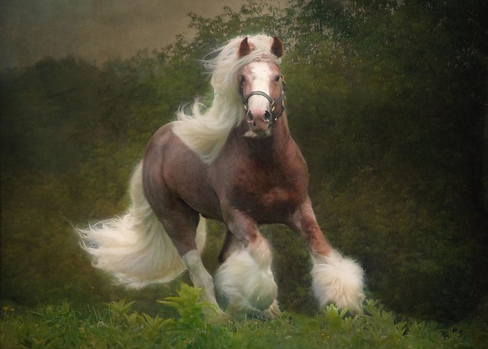 Horses Greeting Card featuring the photograph Simon And The Storm by Fran J Scott
