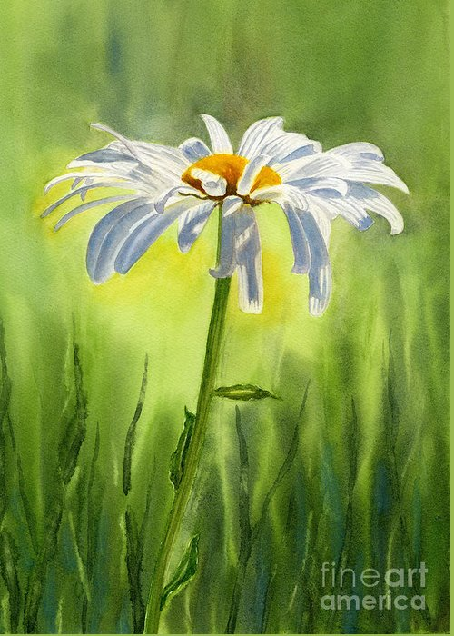 Watercolor Shasta Daisies Greeting Card featuring the painting Single White Daisy by Sharon Freeman