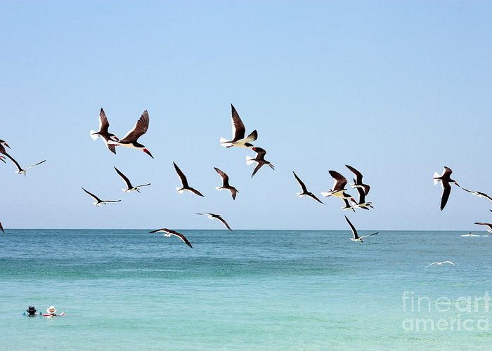 Coastal Birds Greeting Card featuring the photograph Skimmers And Swimmers by Carol Groenen
