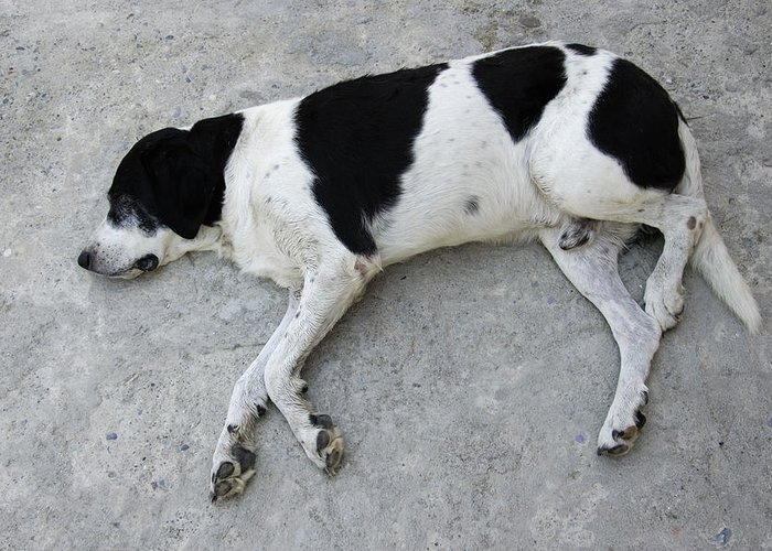 Dog Greeting Card featuring the photograph Sleeping Dog Lying On The Ground by Matthias Hauser