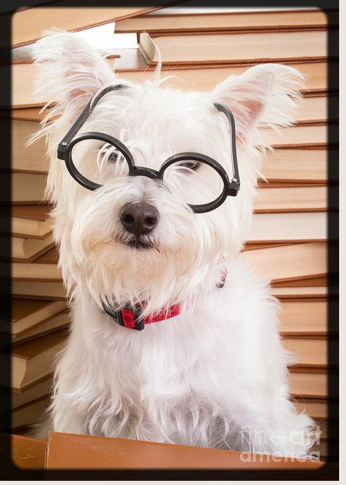 Westie Greeting Card featuring the photograph Smart Doggie by Edward Fielding