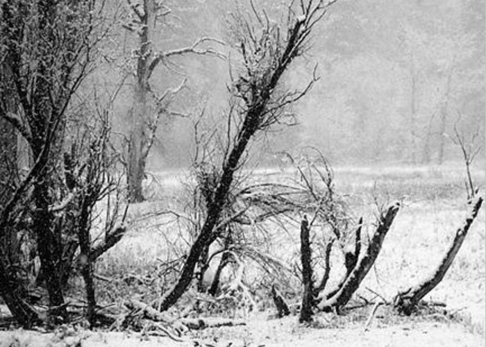 Black Greeting Card featuring the photograph Snow Day 1 by Joanna Pippen