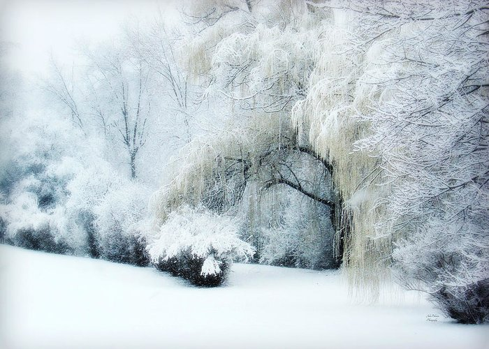 Snow Dream Greeting Card featuring the photograph Snow Dream by Julie Palencia