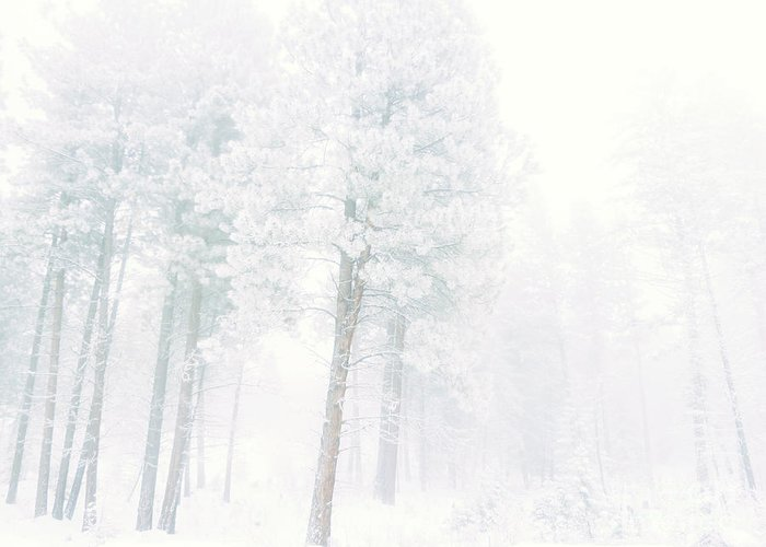 Snow Greeting Card featuring the photograph Snowed In by Tara Turner