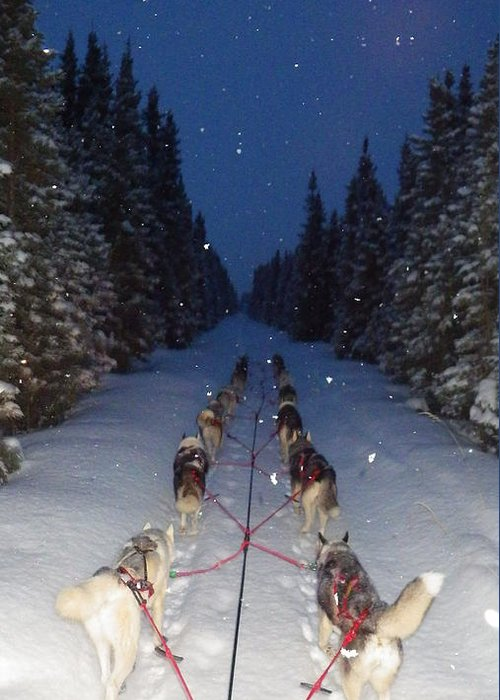 Northwapiti Kennels Greeting Card featuring the photograph Snowy Night In The Pines by Karen Ramstead