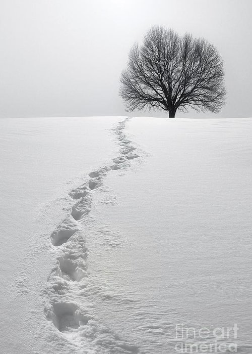 Tree Greeting Card featuring the photograph Snowy Path by Diane Diederich