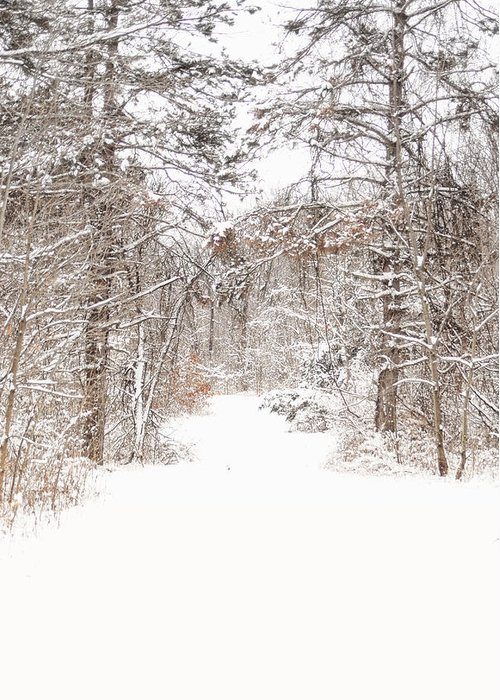 Path. Snow. Trees. Forest. Snow Covered Trees. Snowy Landscape. Winter Landscape. Nature. Wiildlife. Photograph. Canvas. Poster. Greeting Card. Christmas Card. Greeting Card featuring the photograph Snowy Path by Mary Timman