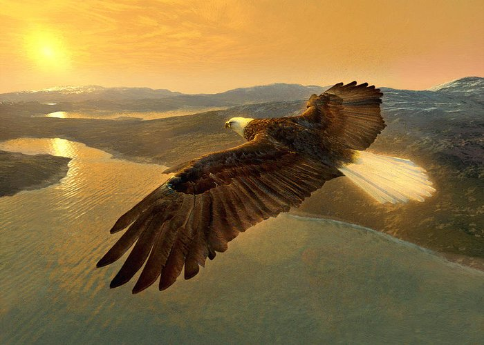 Eagle Greeting Card featuring the digital art Soaring Eagle by Ray Downing