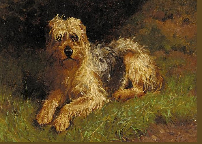 Domestic Animal; Grass; Dog; Pet; Soft Coated; Terrier; Plants And Animals; Domestic; Dirt; Paws Greeting Card featuring the painting Soft Coated Wheaten Terrier by Alfred Duke