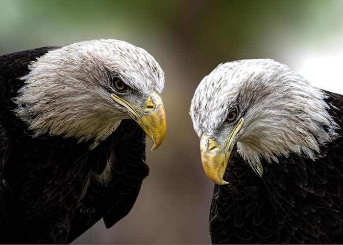 Eagles Greeting Card featuring the photograph Soul Mates by Bob Orsillo