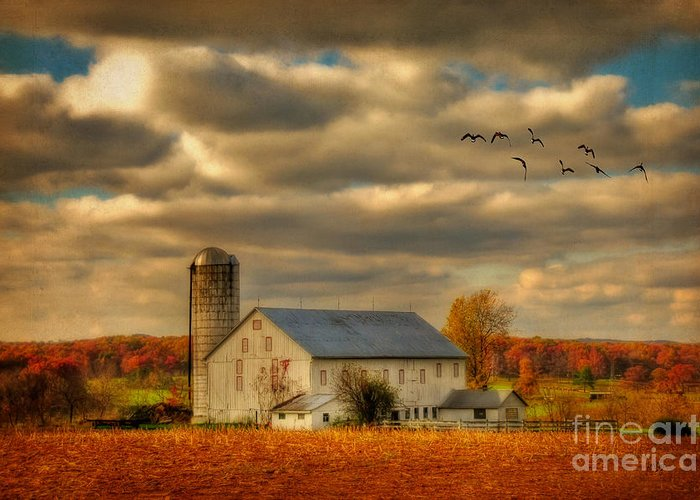 White Barn Greeting Card featuring the photograph South For The Winter by Lois Bryan