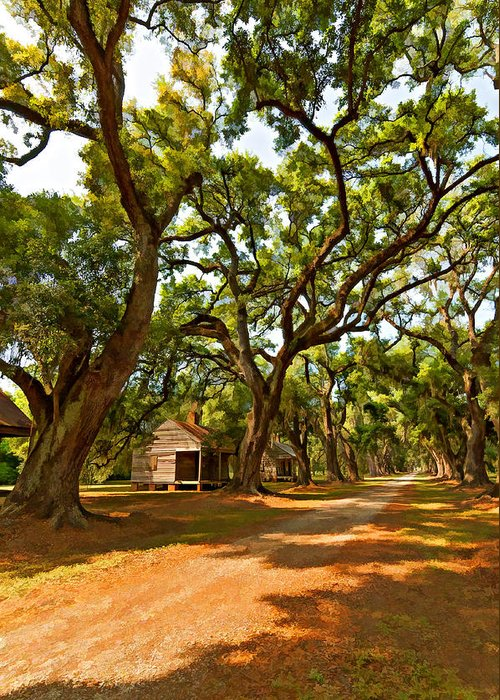 Evergreen Plantation Greeting Card featuring the photograph Southern Lane Paint Filter by Steve Harrington