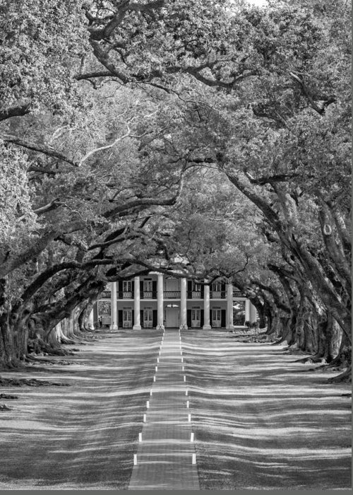 Oak Alley Plantation Greeting Card featuring the photograph Southern Time Travel Bw by Steve Harrington