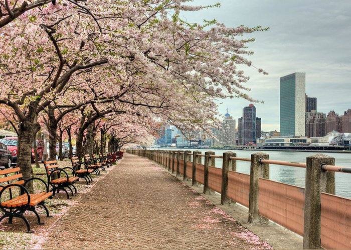 Nyc Greeting Card featuring the photograph Spring Along The East River by JC Findley