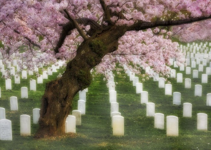 America Greeting Card featuring the photograph Spring Arives At Arlington National Cemetery by Susan Candelario