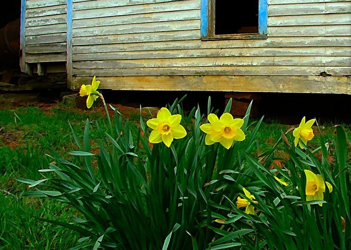Spring Greeting Card featuring the photograph Spring At The Old Home Place by Julie Dant