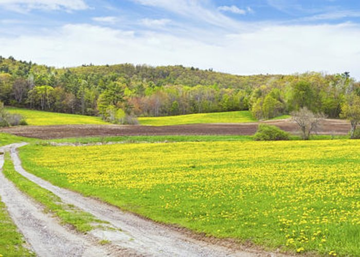Spring Greeting Card featuring the photograph Spring Farm Landscape With Dirt Road And Dandelions Maine by Keith Webber Jr