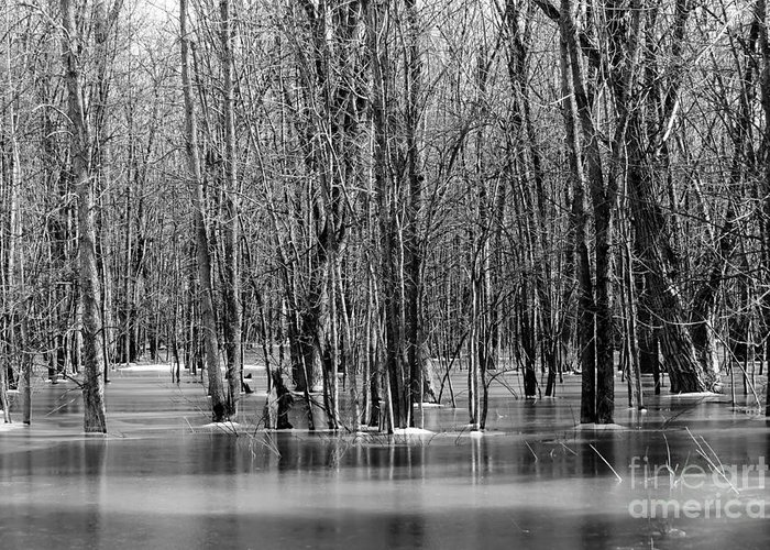 Nature Greeting Card featuring the photograph Spring Flooding by Sophie Vigneault